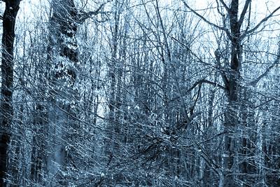 Duotone Woods — Kétszínű erdő