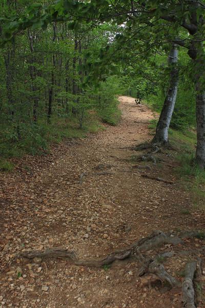 Hiking Trail on the Matra Ridge — Turistaút a Mátra-nyeregél