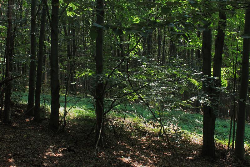 Matra Forest — Mátrai erdő