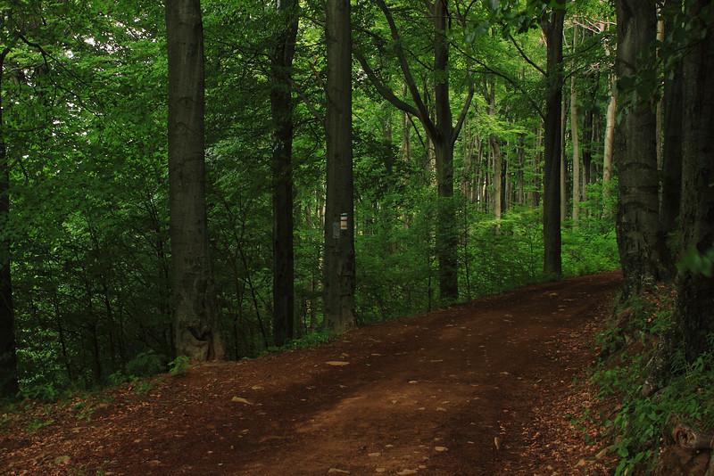 Forest Track on Galyatető — Galyatetői erdei út