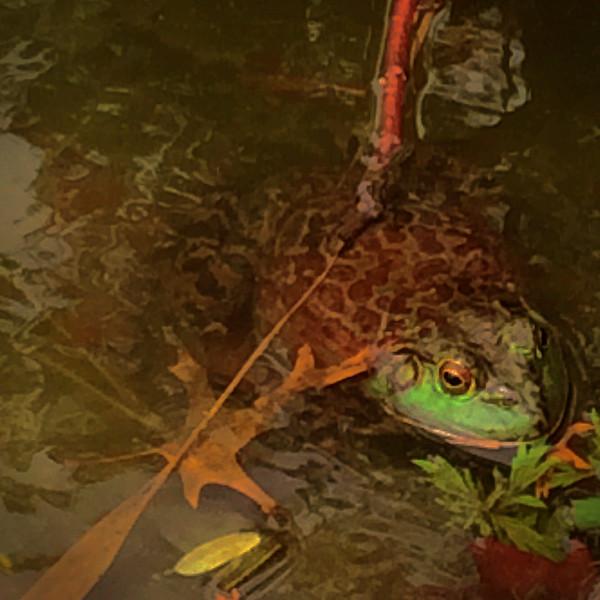 Frog, lower Morningside Park, Harlem<br /> <br /> iPhoneography