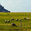 Approaching Mont-Saint-Michel, Basse-Normandie, France I