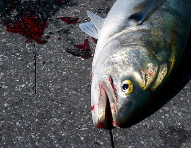 Catch of the Day: Passive Recreation is Sometimes Ill-Defined