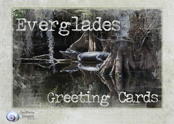 The Janthina Images Everglades Cards are intended to convey a view of various, unique Florida habitats. We consider it a mission to show how evocative, wild and special our area truly is and to encourage visits to experience these areas. When  you hike for the first time into the cool waters beneath the majesty of cypress trees you are captivated by the  beauty , the sweetness of the air, and the sounds of life around  you. The water is surprisingly clear and cool, not at all as you'd imagine a swamp to be. And, if  you stand still you can feel the water move ,almost imperceptibly, but it moves. It gives a tangible sense of the everglades as a giant filter that water moves through and an inkling of how critical an environment it really is. <br /> <br /> Perhaps these cards might  help encourage a visit and learning more about the vast Florida wilderness we know as the Everglades.<br /> <br /> The scenes depict areas of The Big Cypress Swamp, Everglades Marshes, the West Coast Coastal Marshes, and the Red Mangrove community of the northern Florida Keys. More views will be added from time to time.