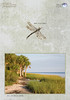 Ibis-St Marks Wildlife Refuge  Card: Depicts late day serenity with Ibis in a coastal marsh setting along the Gulf. The card is decorated with a Libellula insect as dragonflies are present in great numbers in this area at times.