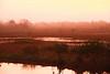 Sunrise, MarshTrail, 10,000 Islands (3)