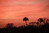 Sunrise, MarshTrail, 10,000 Islands