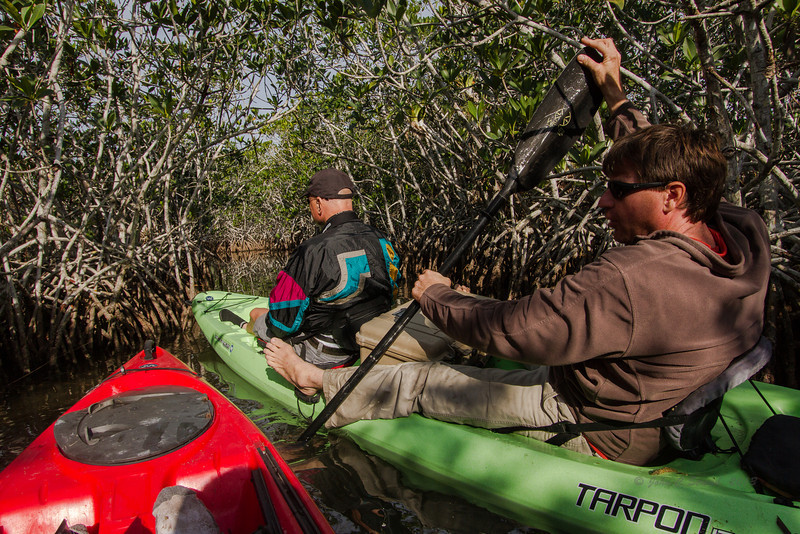 Maneuvering thru mangrove mazes searching for wildlife photo ops
