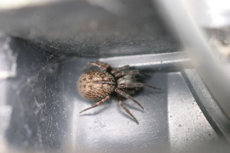 Please let me know if you know what kind of spider this is!