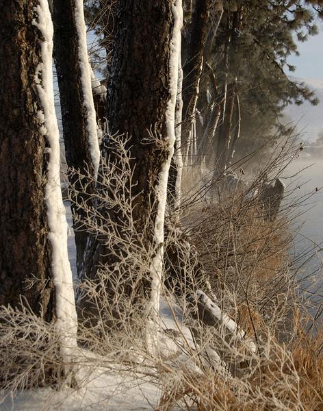 7. Tree Study (Lake Ewauna, Klamath Falls, Oregon)
