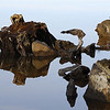 8. Sculpture in Reflection
