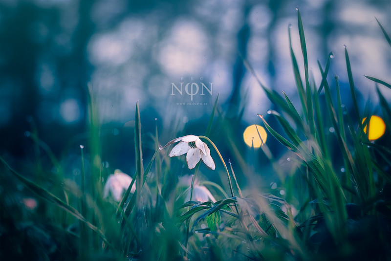 """Through spring to infinity""<br /> <br /> (CC) BY-NC-ND -  <a href=""http://www.pronon.se"">http://www.pronon.se</a><br /> <br /> #pronon #nature #spring #art #örebro #sweden"