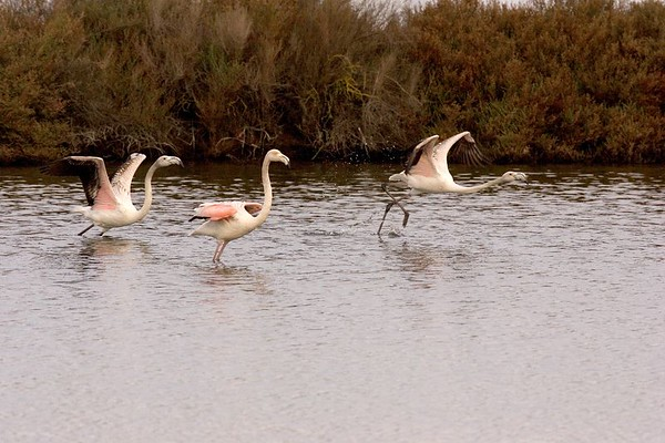 Extremadura Winter 2004