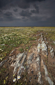Stormy skies over the steppe