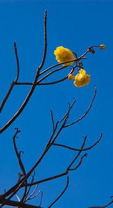 Floridian Tree
