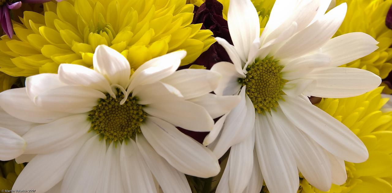 Week old flowers