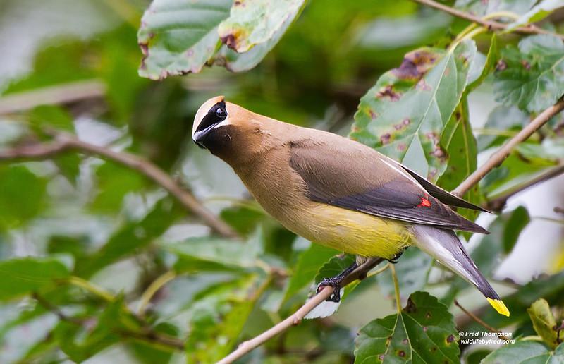 Slide Show Of Some Of My Bird Photos >> Wildlifebyfred