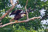 BALD EAGLE--THIS IS PHOTO NUMBER 12,000 ON MY WEB SITE, THIS IS A NUMBER I NEVER THOUGHT I WOULD REACH WHEN I STARTED MY WEB SITE