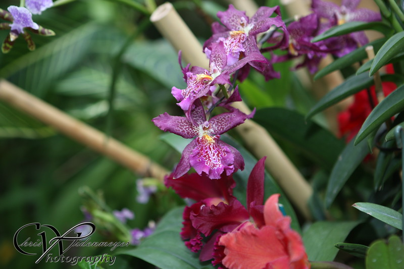 Orchid Mania at Cleveland Botanical Gardens . What a beautiful place to visit in February and admire God's beautiful creation :)