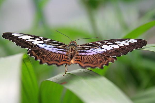 Butterfly taking off