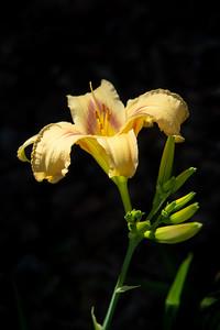 Westminster Flowers -025