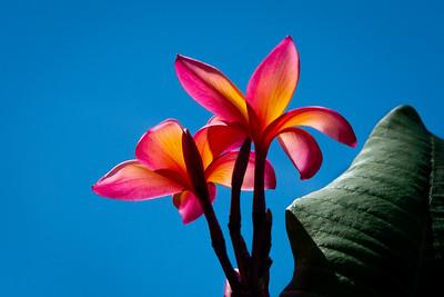 Flower 078