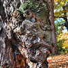 Alien Face<br /> Old Man in the Tree