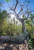 Long Tail Dress Tree