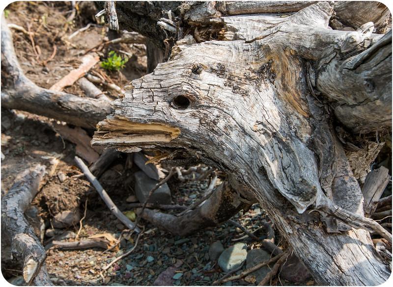Turkey Bird Face Tree
