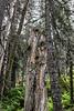One-Eyed Tree