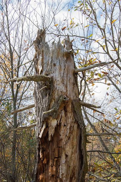 Big Eyebrows tree