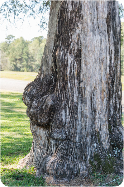 faces in nature/ wood faces/ tree faces