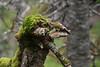 Eagle Face Tree