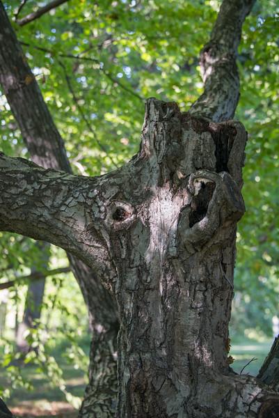 Angry Bull Tree