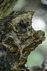 Dog Face Tree