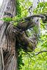 Unicorn Tree