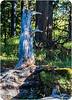 Long Beak Face Tree