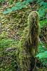 Rosita Tree/ Sesame Street Character