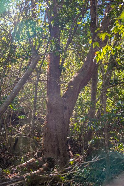 Legs Up Tree
