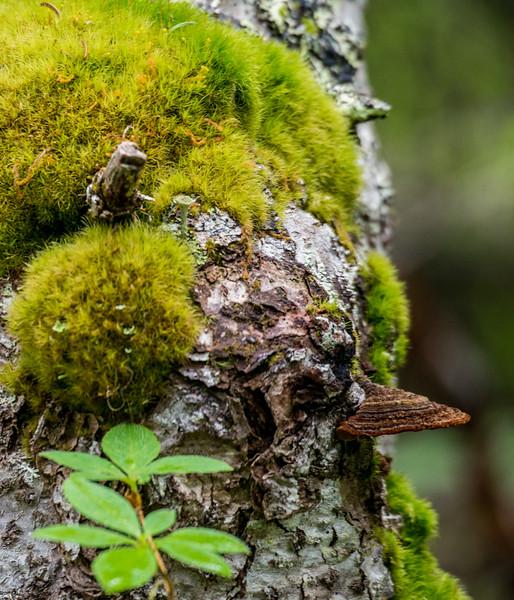 Beak face Tree