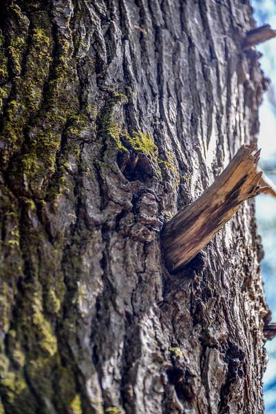 Pinocchio Face Tree