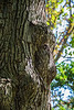 Monkey Face Tree