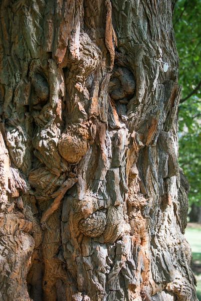 Round Eyes Tree