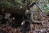 Armadillo Tree