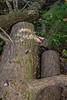 Cuddling Tree