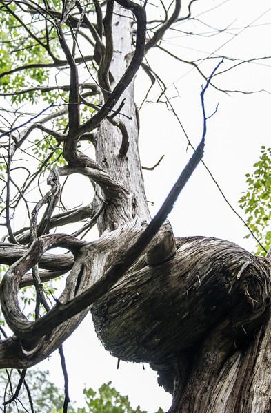 Deer with Antlers Tree