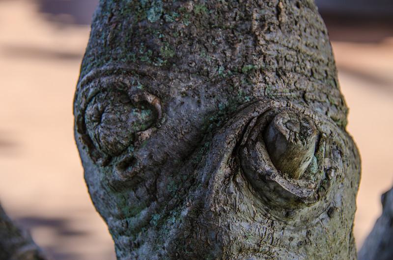 Alien Tree