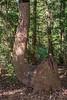 Flexible Tree