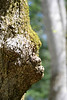 Orangutan Profile Tree