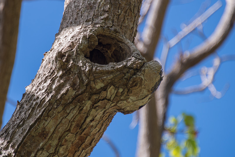 "Calf face Tree/ ""Annabelle's Wish"" Cartoon"